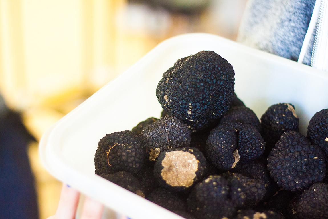 La truffe du Ventoux, Monteux en provence sud de la France. Chambre d'hôte, gites, week-end dégustation truffe et chasse aux truffes - truffe noire, truffe de bourgogne