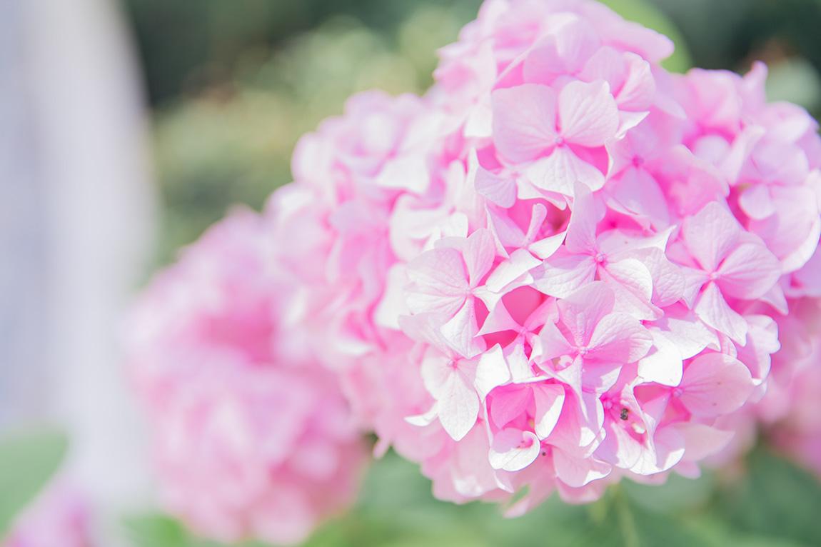 Fleurs roses jardin paris - blog mode lifestyle voyage