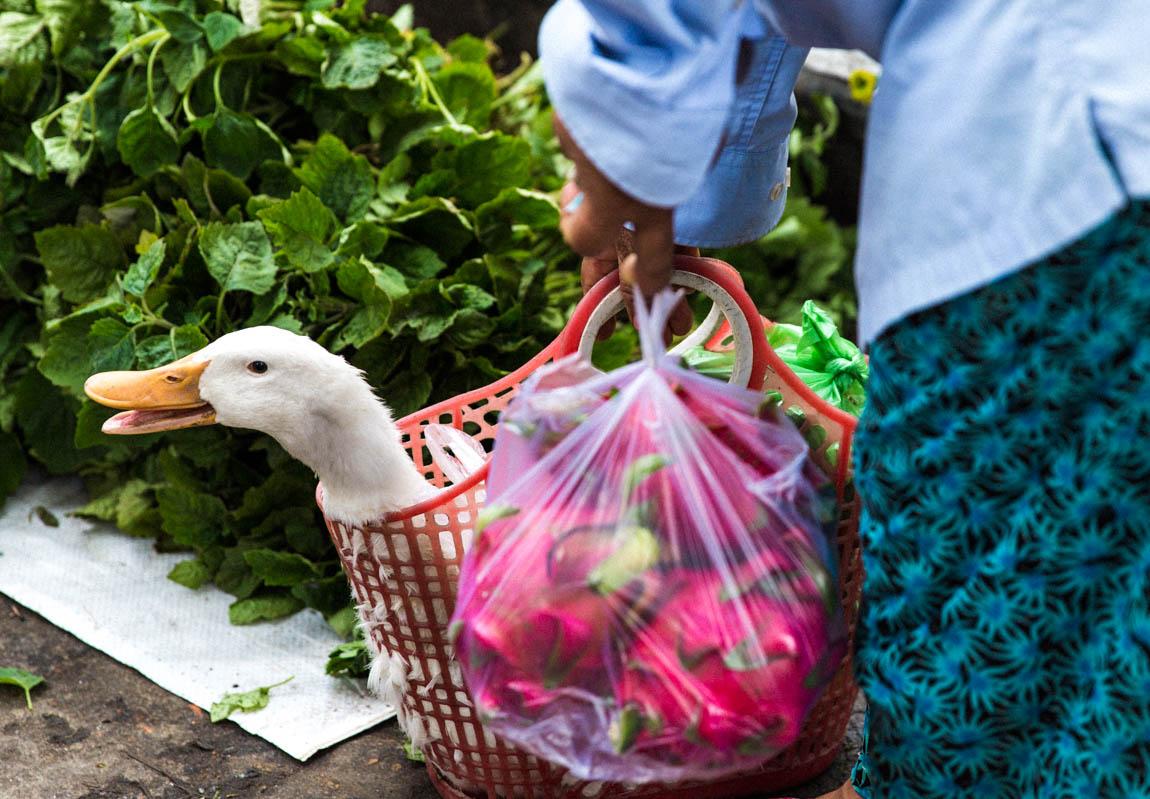 Hoi An Market duck - blog voyage Travel french blog - voyage au Vietnam avec Comptoir des voyages