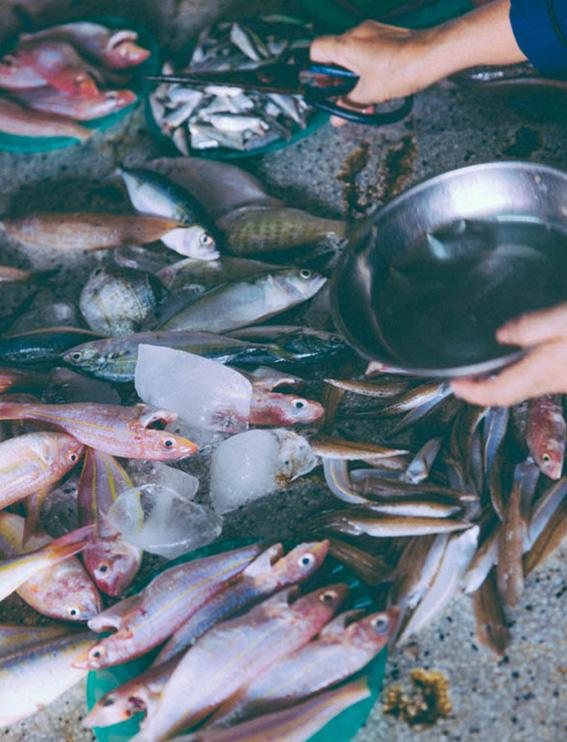 Marché Hoï An les poissons répandus sur le sol- Hoi An Market fish on the floor - voyage avec Comptoir des voyages blog voyage - blog mode lifestyle Dollyjessy