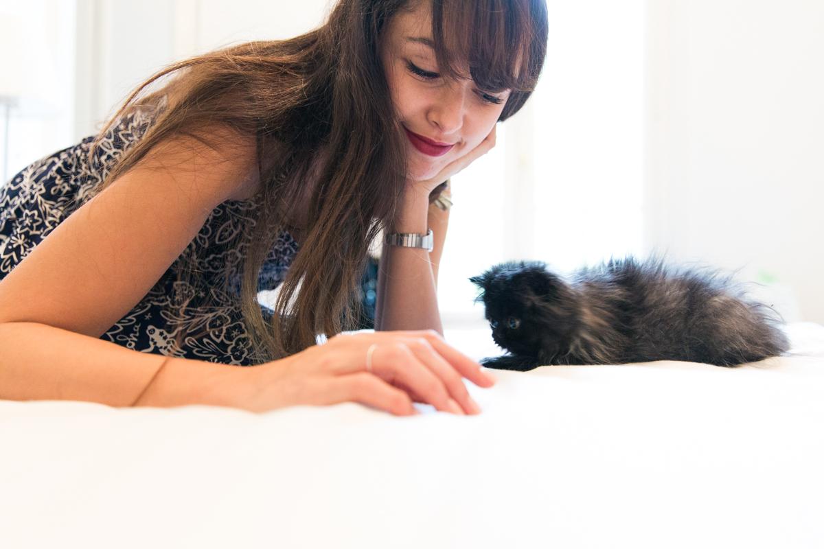 Adopter un chaton persan : noir couleur blue smoke - petit chaton trop mignon, plus mignon des chatons