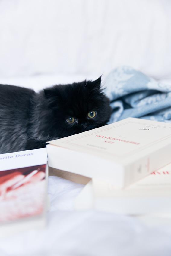 Chaton persan adorable - Blog lifestyle - blogueuse parisienne française Dollyjessy