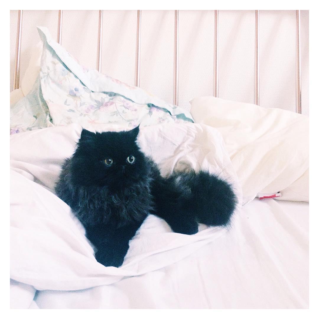 Chaton persan noir blue smoke Georges blogueuse chat paris