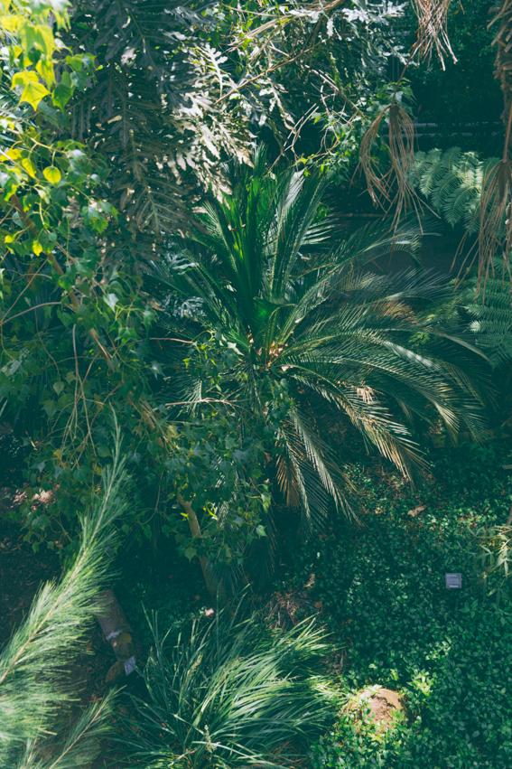 Hortus Botanicus Jardin botanique Amsterdam - magnifiques serres