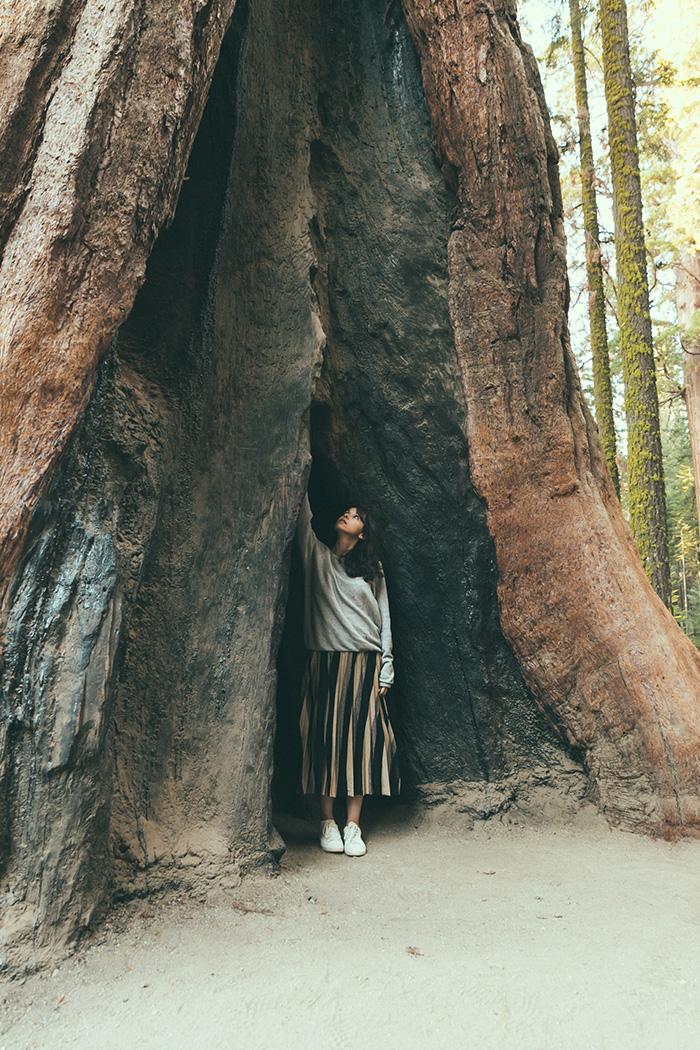 Sequoia Park blog français Big Sherman voyage